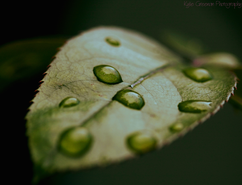 leaf, rain, droplets