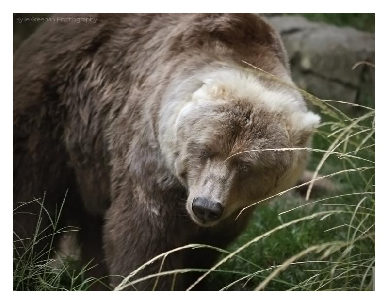 bear hugs :o)
