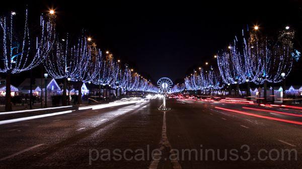 Champs de Noël