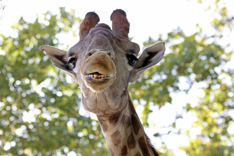 A day at the Zoo (Lisboa) - V