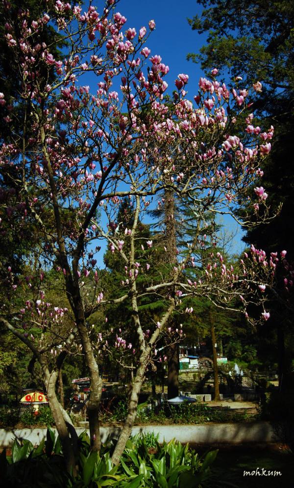 flower pink tree garden
