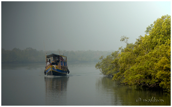 The Sunderbans!