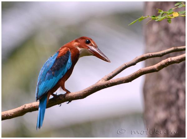 The kingfisher!