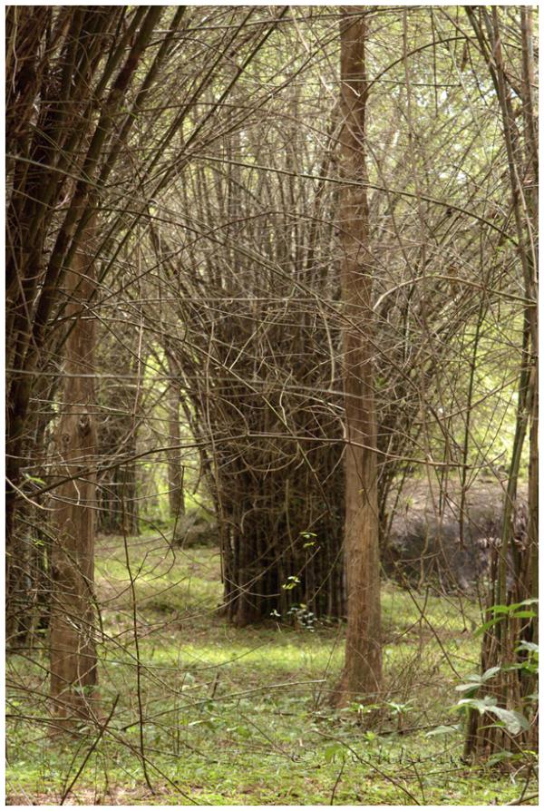 The bamboo shades!