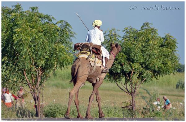 The camel rider!