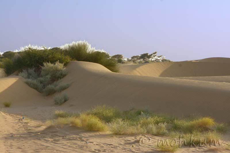 The Sand Dunes of Rajasthan!
