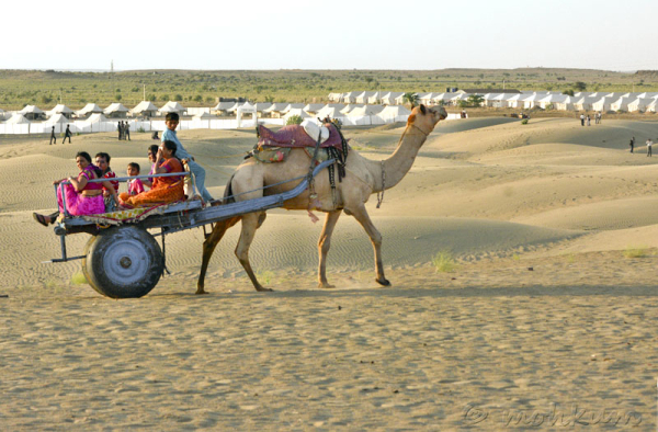 The desert safari!