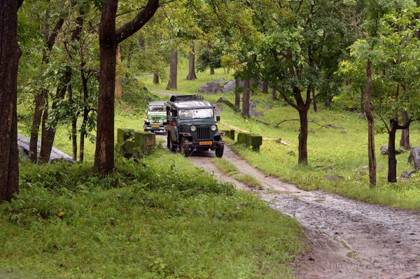 Through the forests of Kerala!
