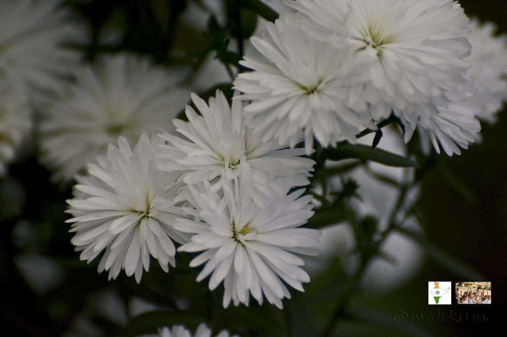 The white flowers!