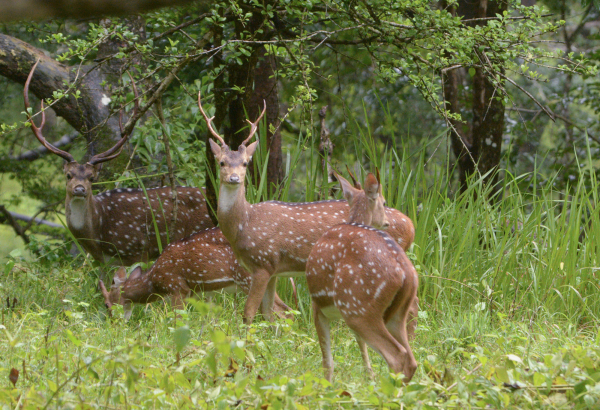 deer forest thopetty wayanad kerala