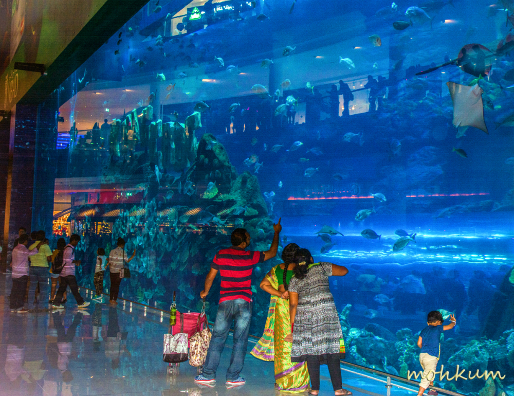 aquarium fish people dubai mall