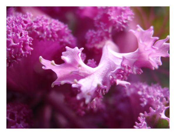 Magia lilás