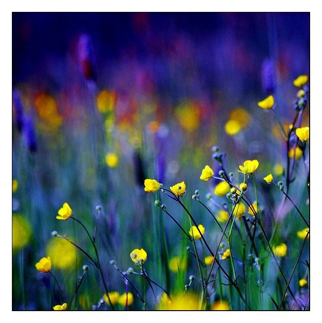 une envie de fleurs