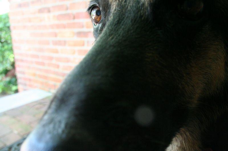 Nose I