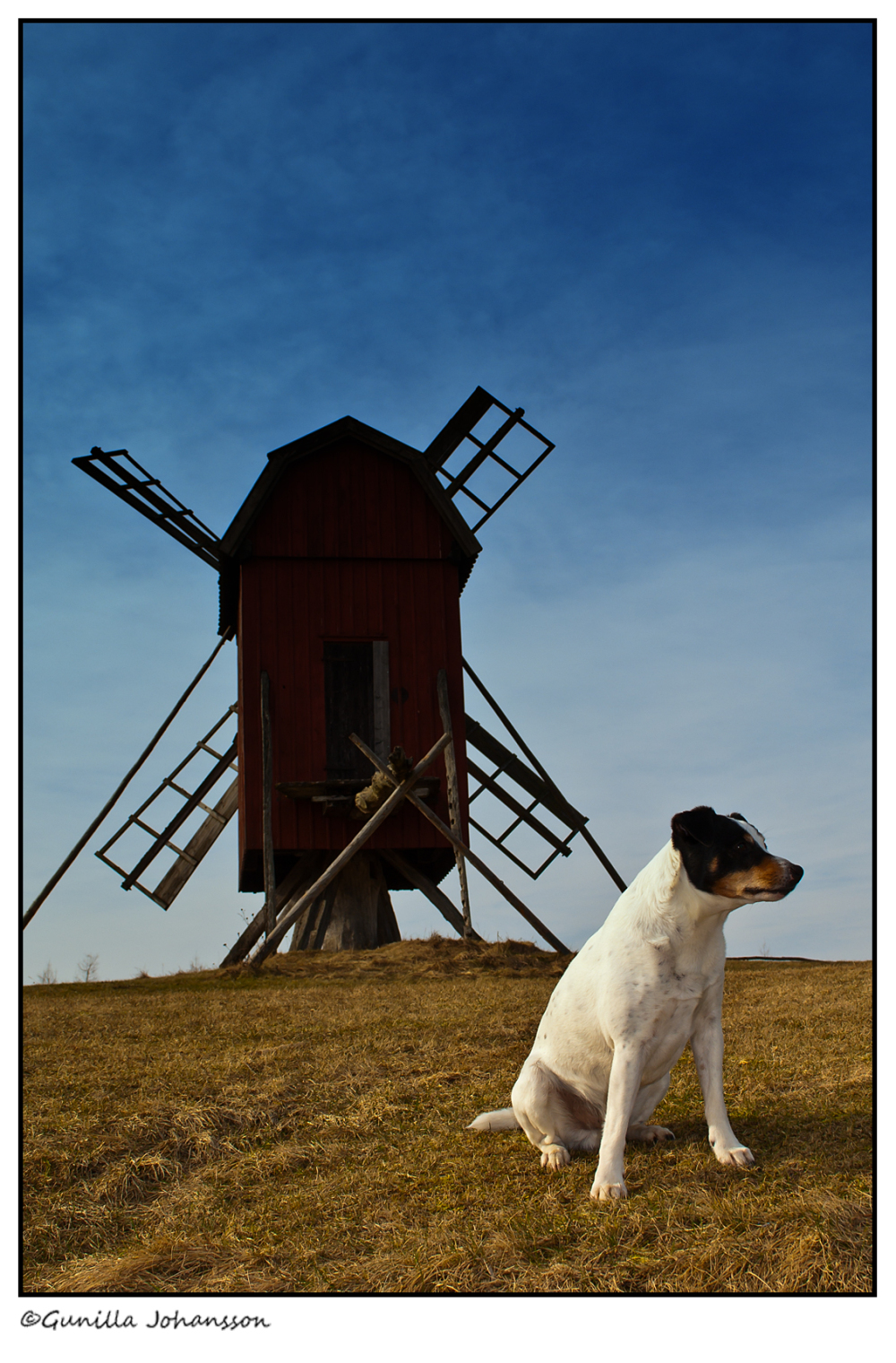 the old man and the windmill
