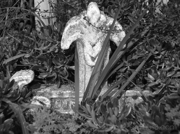 Overgrown Cemetery, Salinas, Ecuador