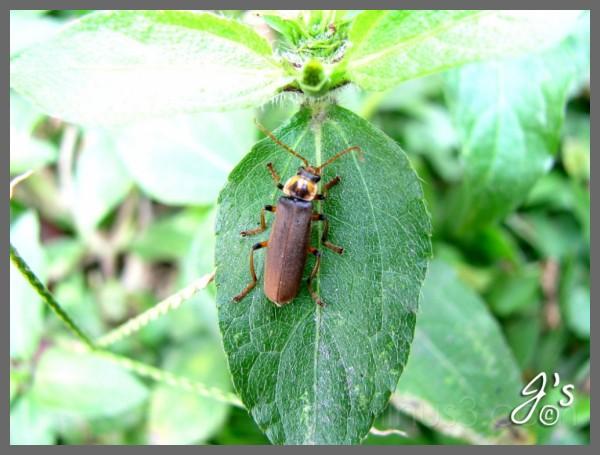 Bugs#1