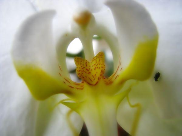 Flower#30