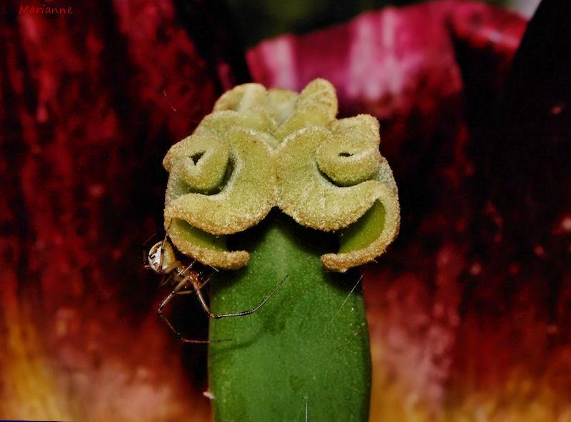 ...Autoportrait végétal .....
