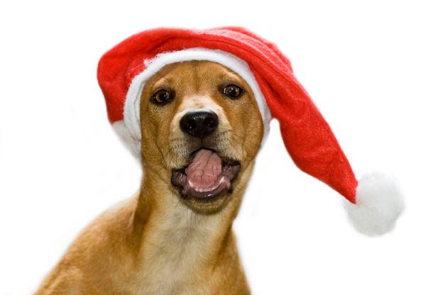 Ling hond dog christmas kerstmis