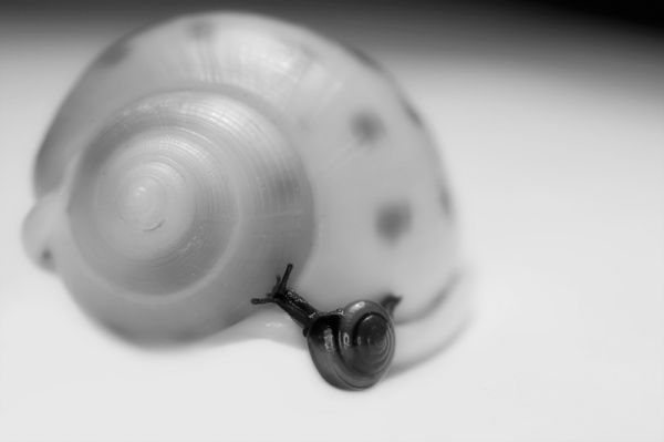 macro of a little snail on a shell