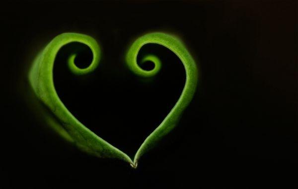 heart shaped lotus leaf green macro