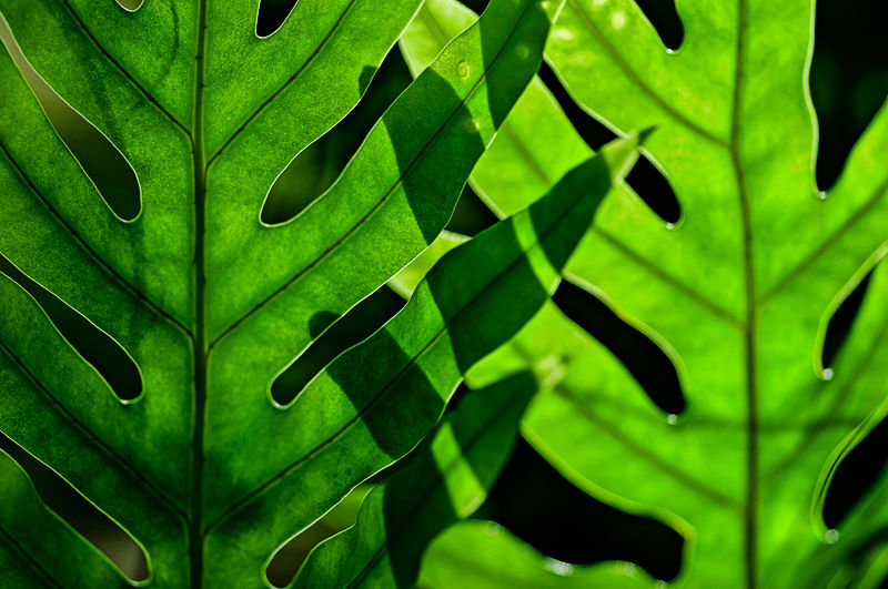 duo fern abstract close up macro