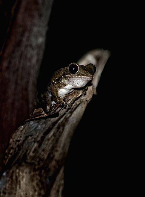 tree frog in the dark