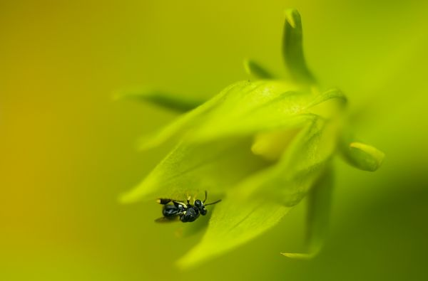 bee in green