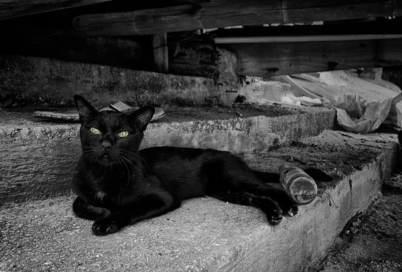 black stray cat
