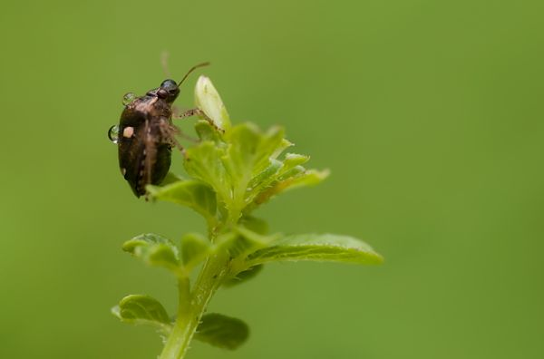 shieldbug covered in raindrops