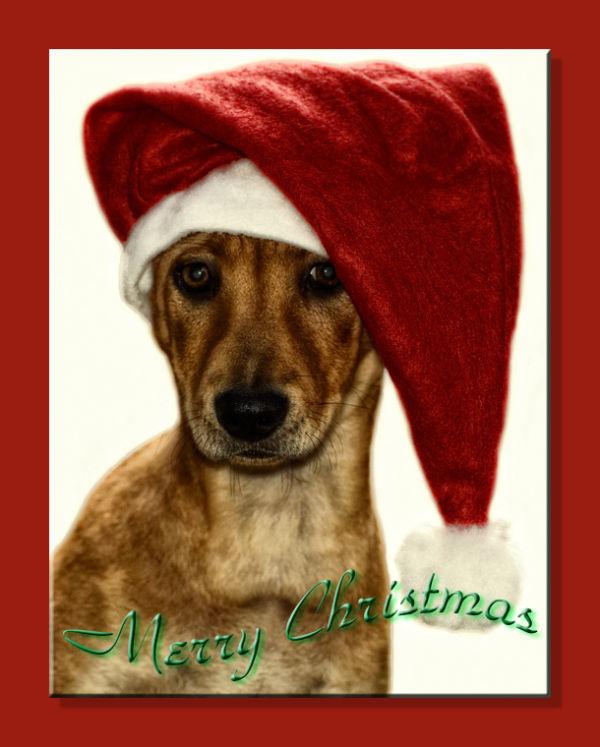 christmas dog wish