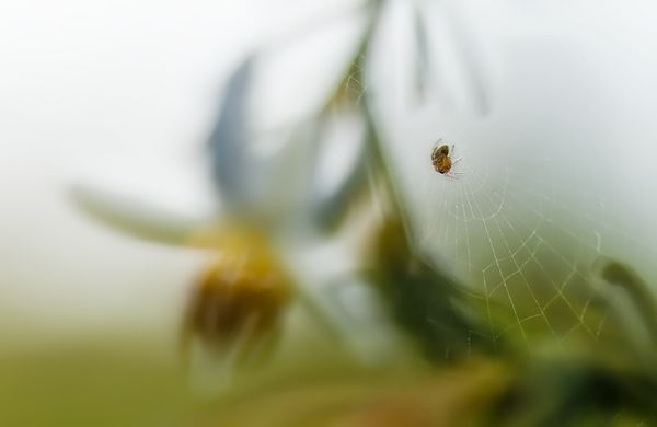little spider in cob web