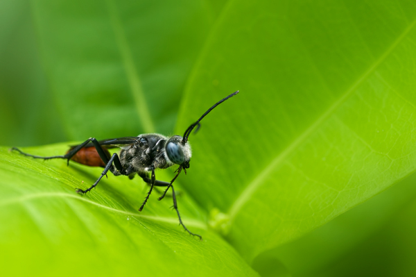 insect thread waisted wasp