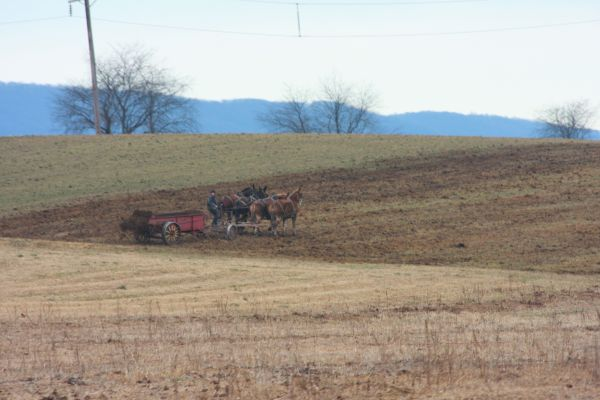 Throwing Manure ( the old fashioned way)