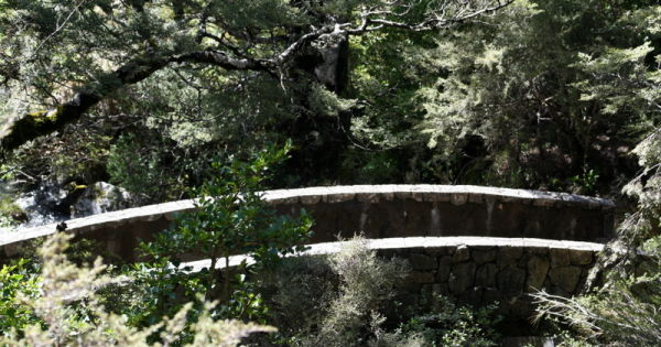 bridge bush Arturs Pass,