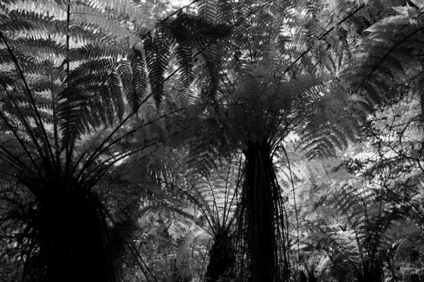 Canopy of Ferns. /2
