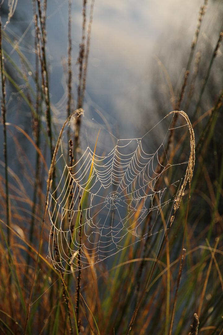 The Romantic Web