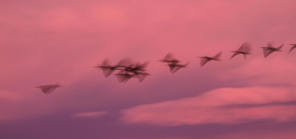 Pink flight.
