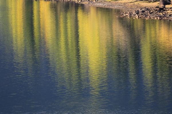 Reflected poplars