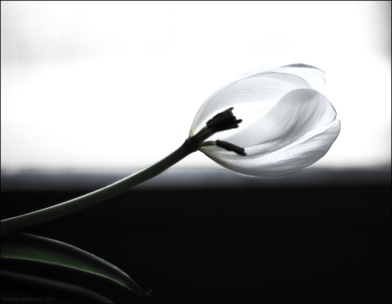 Losing Petals