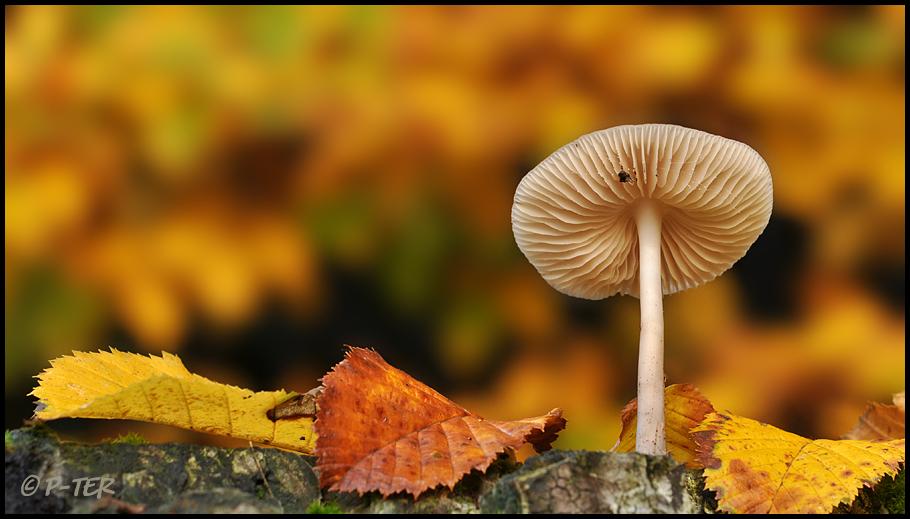 autumn pure