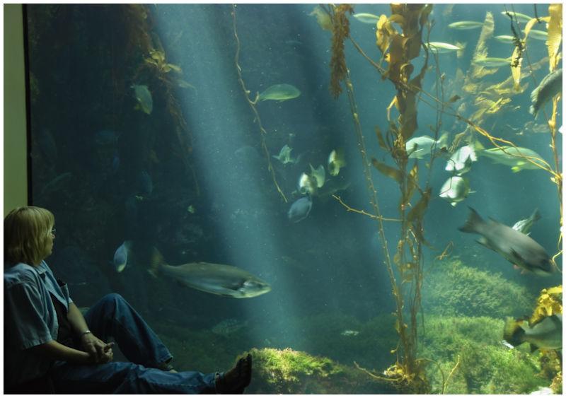 A Day at the Aquarium