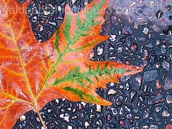 Fall on Floor