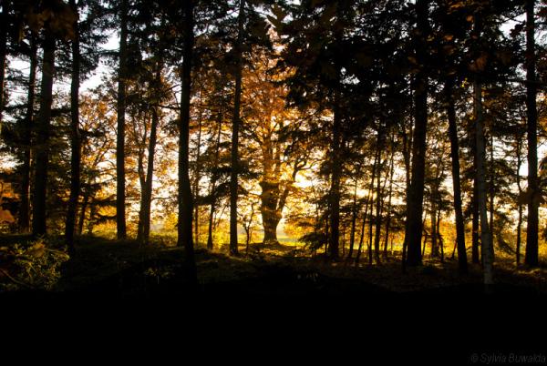 Golden light (2/2)