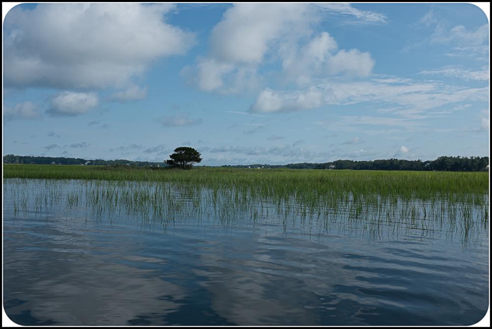 Marsh in NC