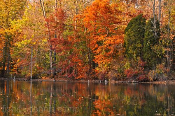Rowe Autumn Color