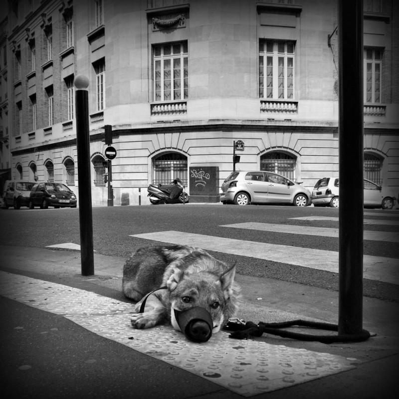 Le chien abandonné