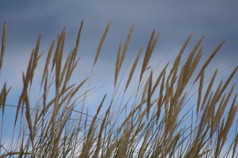 blowing in the wind II