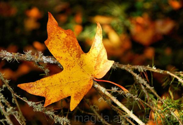 Autumn Spotlight